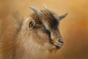 Portrait Of A Nubian Dwarf Goat