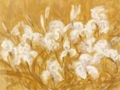 Irises II