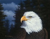 The Face Of Freedom