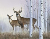 Deer In Birch Woods