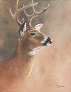Deer Close-Up