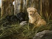 Lab Pup Pair