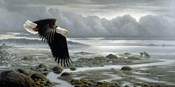 Lowtide - Bald Eagle