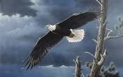Soaring Wings