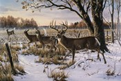 Cautious Crossing - Whitetails