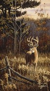 Autumn Whitetail