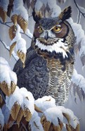 Winter Watch - Great Horned Owl