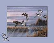 Ducks In Flight 1