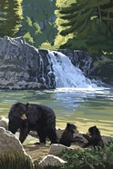 Black Bear with Cubs 3