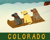 Colorado Sled Dogs