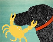 The Crab Black Dog Yellow Crab