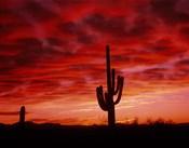Organ Pipe Cactus State Park, AZ