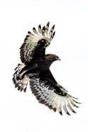 Long-Crested Eagle, Ndutu, Ngorongoro Conservation Area, Tanzania