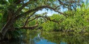 Estero River in Fort Myers, Florida