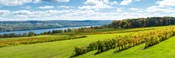 Glenora Vineyard, Seneca Lake, Finger Lakes, New York State