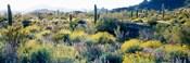 Desert AZ