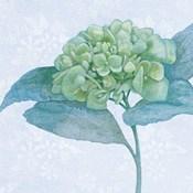 Blue Hydrangea II Crop