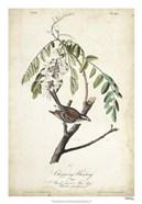 Delicate Bird and Botanical I
