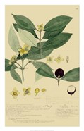 Descubes Foliage & Fruit II