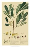 Descubes Foliage & Fruit IV