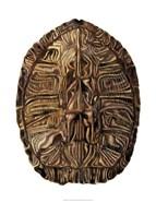 Tortoise Shell Detail II