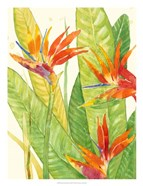 Watercolor Tropical Flowers III