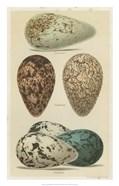 Antique Bird Egg Study I
