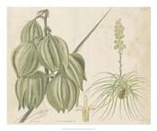 Tropical Curtis Botanical I