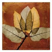 Golden Ficus Burkey