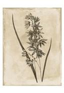Floral Earthtone