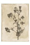 Floral Earthtone Three