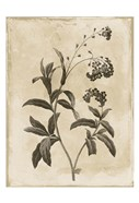 Floral Earthtone Four