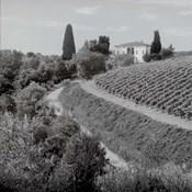 Tuscany V