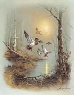 Ducks A
