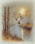 Ducks B
