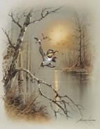 Ducks C