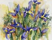 Indelible Irises