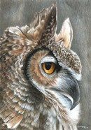 Sepia Owl
