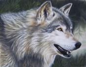 Timber Wolf Dark