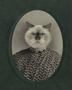 Cat Series #1