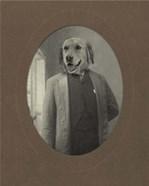 Dog Series #2
