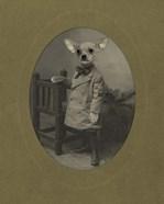 Dog Series #3