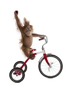 Monkeys Riding Bikes #2