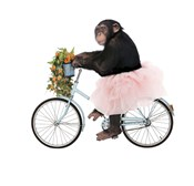 Monkeys Riding Bikes #1