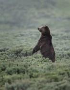 Black Bear Cub Upright