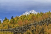 Mountain Fall Color