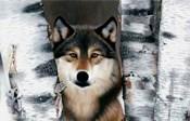 Wolf Peeking Through The Birch