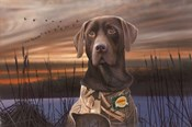 Chocolate Lab In The Sunset