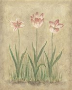 Blooming Tulips I