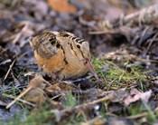 Long Beaked Baby Bird